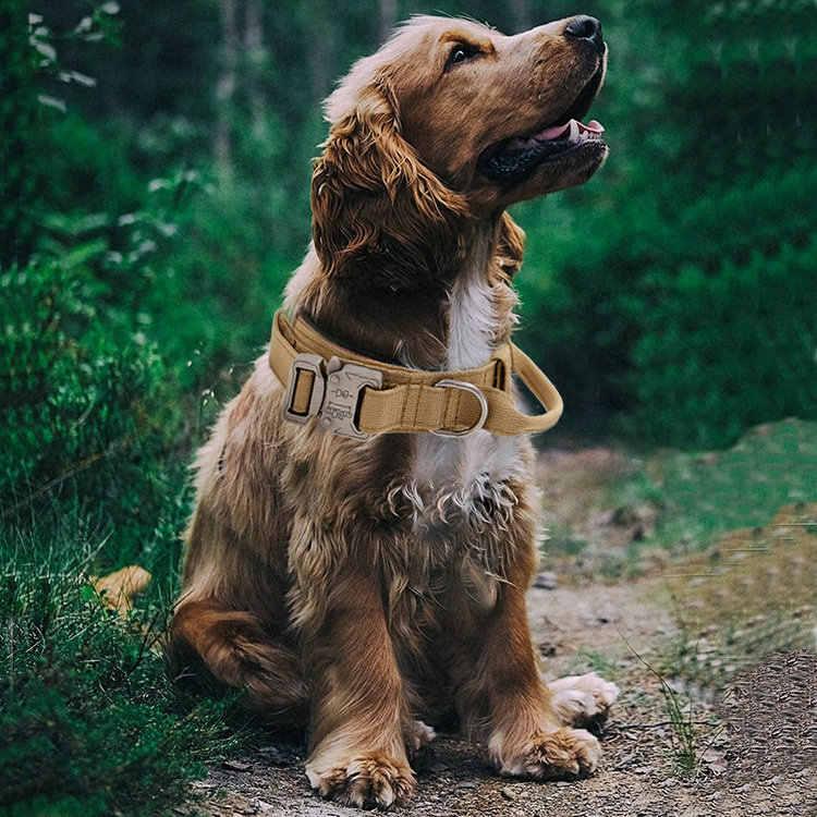 Honden Halsband met Setter