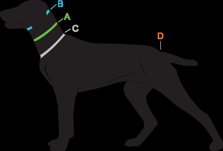 Opmeten halsband hond