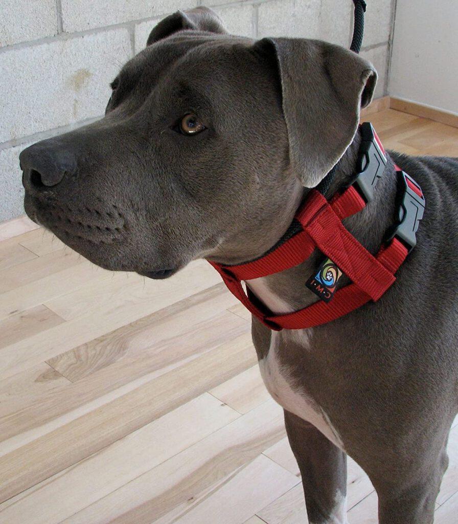 Halsband hond Cesar Millan