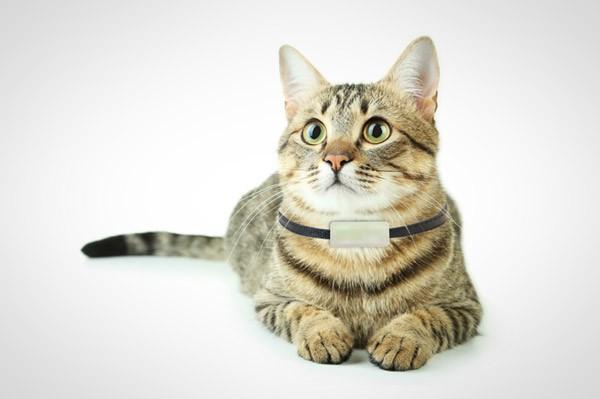 Halsband gps kat