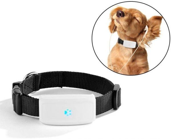 Halsband hond gps