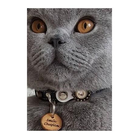 halsband kat met penning
