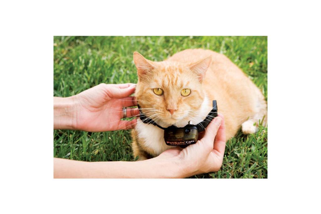 kat in tuin houden halsband