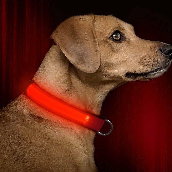 halsband met verlichting voor hond