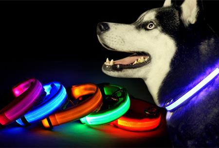 hondenhalsband met licht